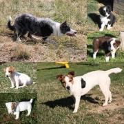 AUX JOYEUX 4 PATTES - Centre Canin